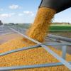 Услуги по хранению зерна