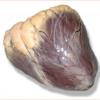 Сердце говяжье охлажденное 1 категории