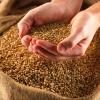 Аналіз якості посівного матеріалу