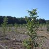 Саджанці плодових, ягідних і горіхоплідних культур