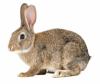Премиксы для кроликов