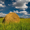 Корм для сільськогосподарських тварин