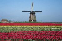 Туры Франция. Туры Голландия. Звезды Европы-14 дн