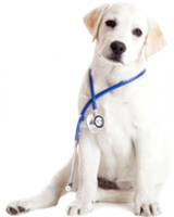Випробування ветеринарних препаратів ГОСУДАРСТВЕННЫЙ НАУЧНО  Випробування ветеринарних препаратів