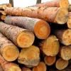 Лісоматеріали хвойних порід