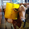 Оборудование для ухода за животными