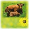 Информационная база «Мясомолочная отрасль Украины»