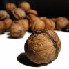 Створення нових сортів волоського горіха