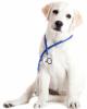Лабораторна діагностика хвороб тварин