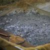 Рибопосадковий матеріал рослиноїдних риб та коропа
