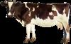 Премікси та кормові добавки для молочних корів