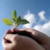 Дослідження та розробки в області карантину і захисту рослин