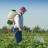 Вдосконалення заходів боротьби з шкідниками сільгоспкультур
