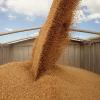 Відвантаження зерна на залізничний і автотранспорт
