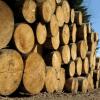 Лісоматеріали листяних порід
