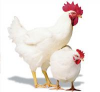 Премиксы для домашней птицы