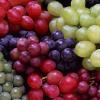 Виноград сортов столово-винных
