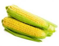 Средне-ранние гибриды кукурузы