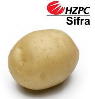 Насіннєва картопля Сіфра
