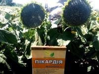Семена подсолнечника Пикардия