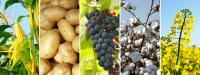 Исследования по рынку средств защиты растений