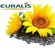 Гібридне насіння соняшнику
