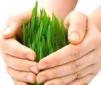 Засоби захисту рослин
